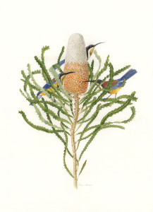 Birds & Banksia for website