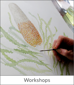 botanical-art-australia-workshops-leonie-norton