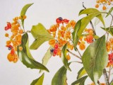 Auranticarpa rhombifolia