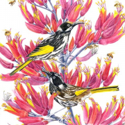 New-Holland-Honeyeaters-of-NZ-Red-Flax