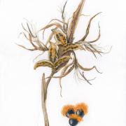 Streliztia-reginae-Seeds