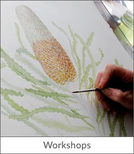 botanical-art-australia-workshops-leonie-norton